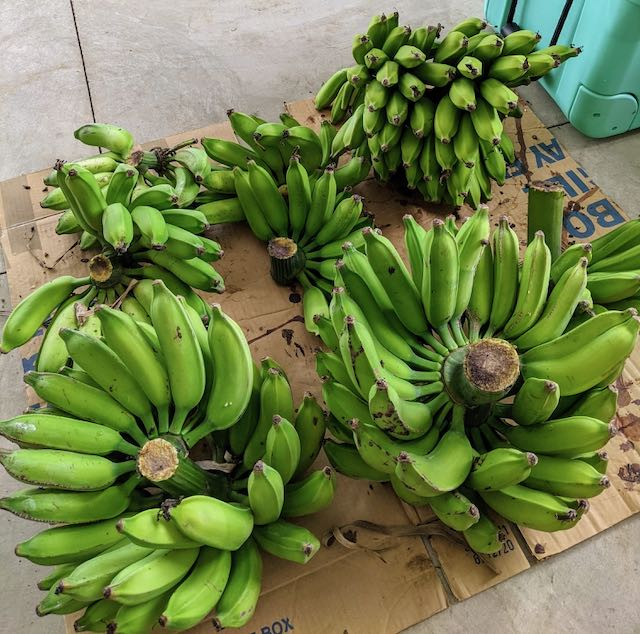 Bunches of green bananas.
